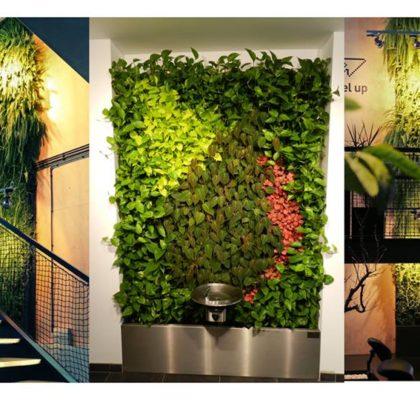 zielone rośliny na ścianach zielono mi